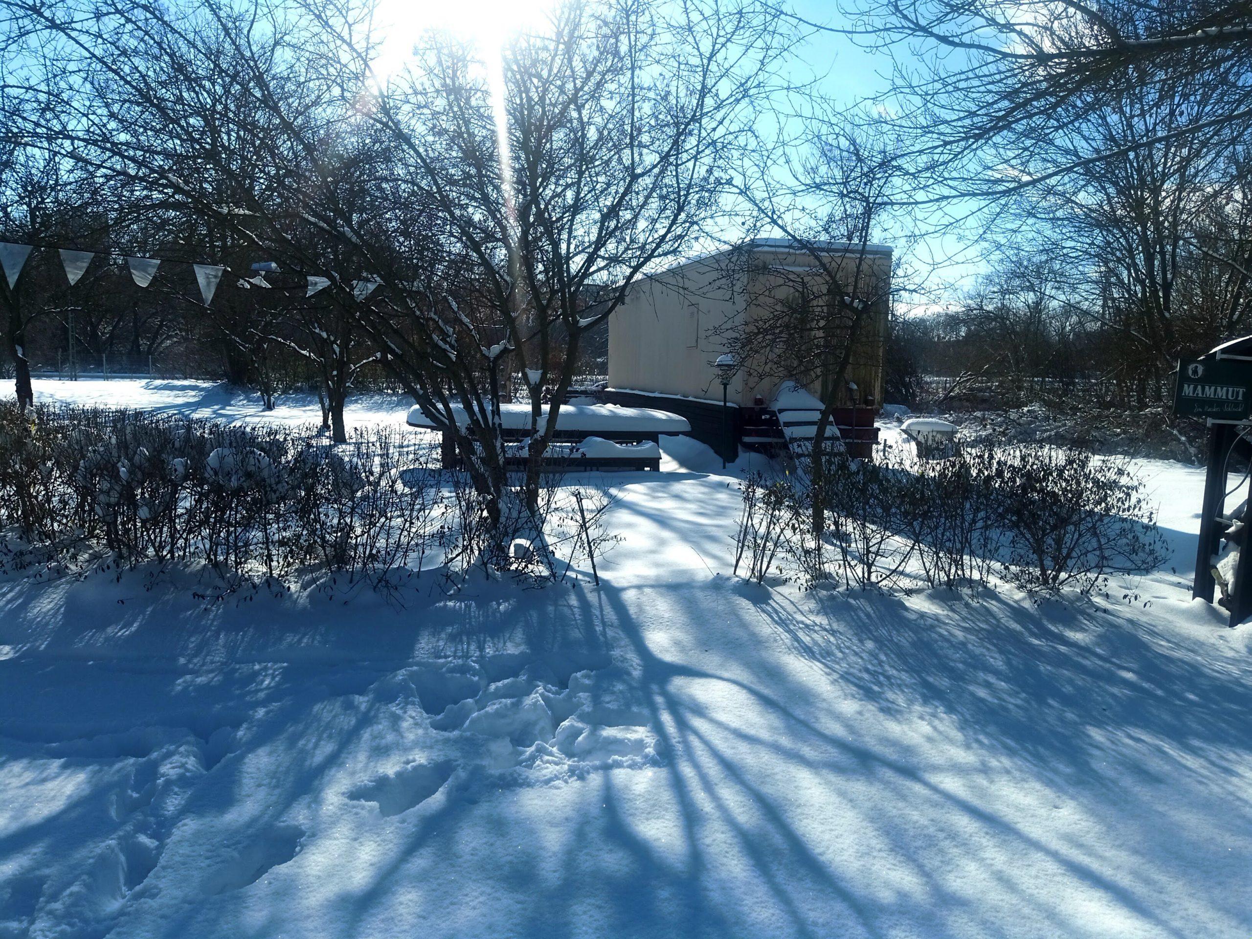 Winter-Schönheit